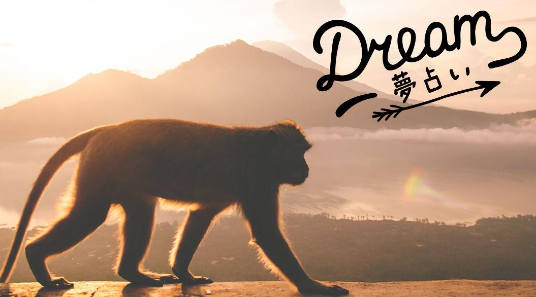 【夢占い】猿の夢が示す意味とは?白い猿をみつけて幸運をつかめ!