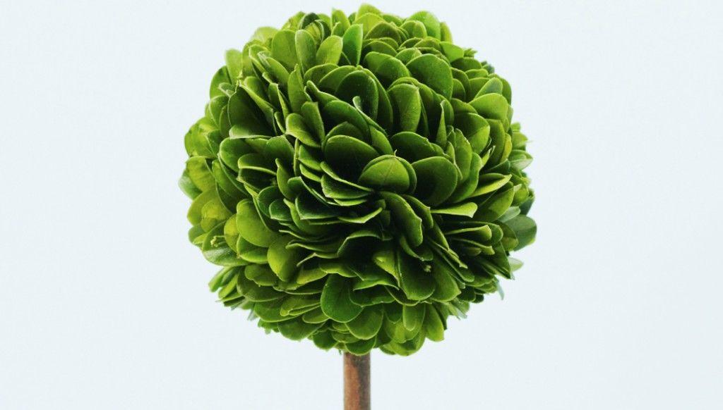 woodtopiary160126-03