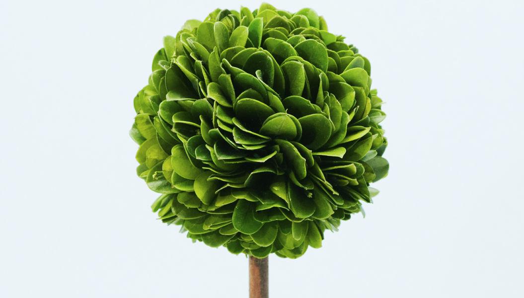 シルエットが愛しい!観葉植物「ウッドトピアリー」って知ってる?
