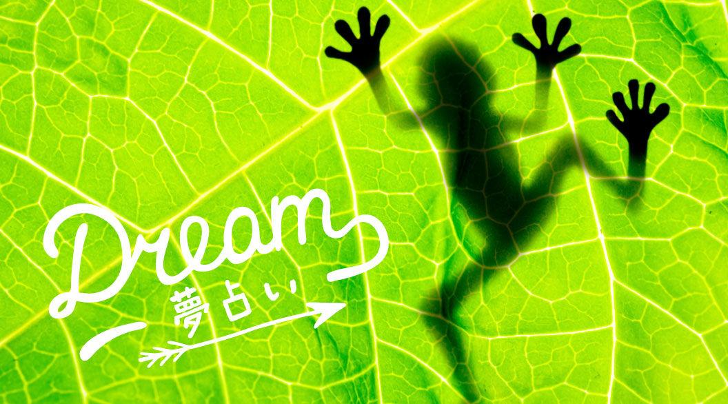 夢にカエルが出てきたことありますか?大きいカエルは金運上昇中のサイン!