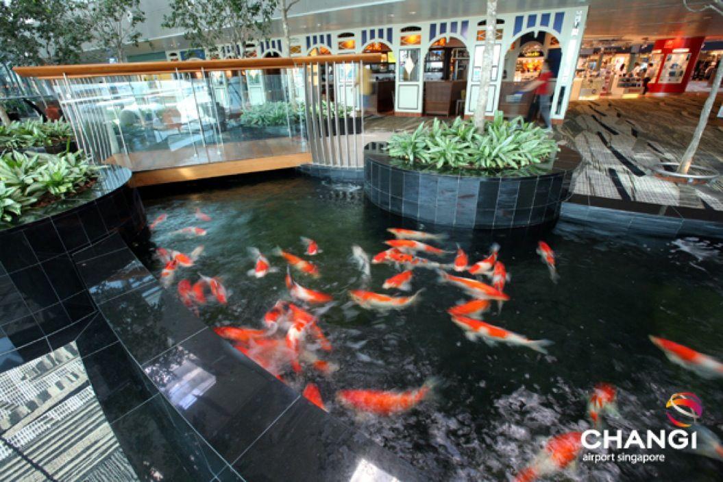 85singo_Terminal-3-Transit-Koi-Pond