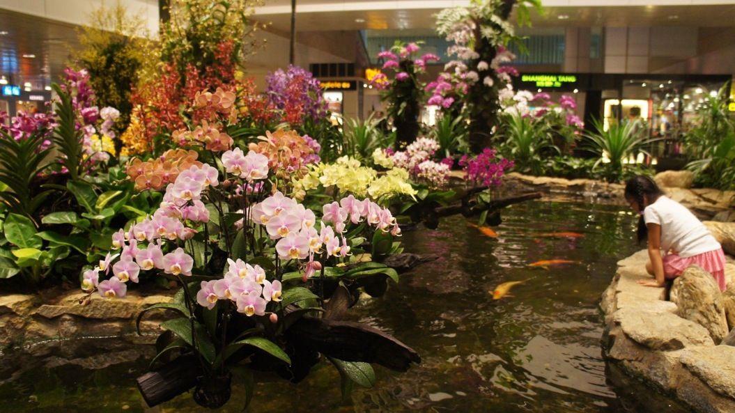 85singo_orchid-garden-singapore-changi-airport2