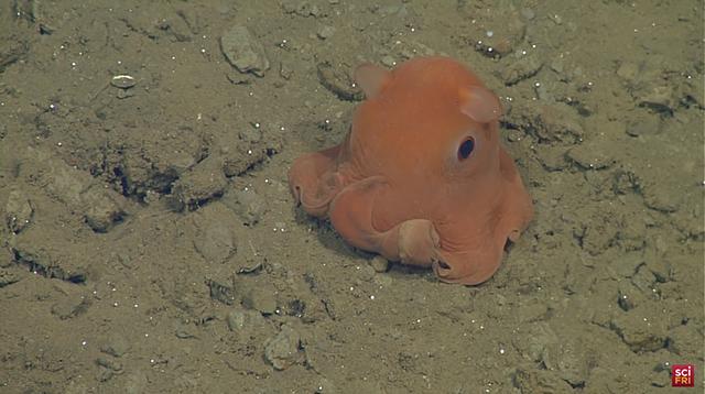 adorable-octopus-6
