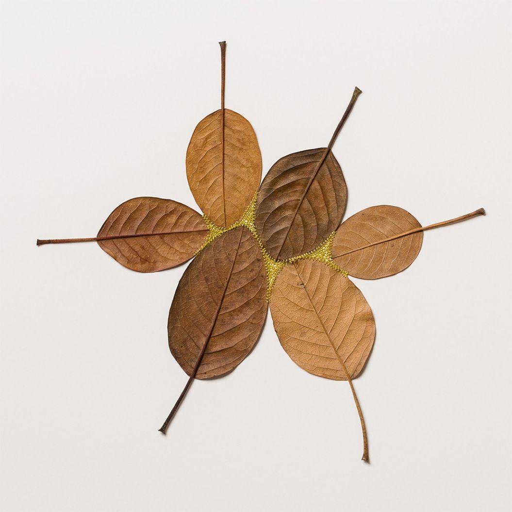 85singo_leaf-12
