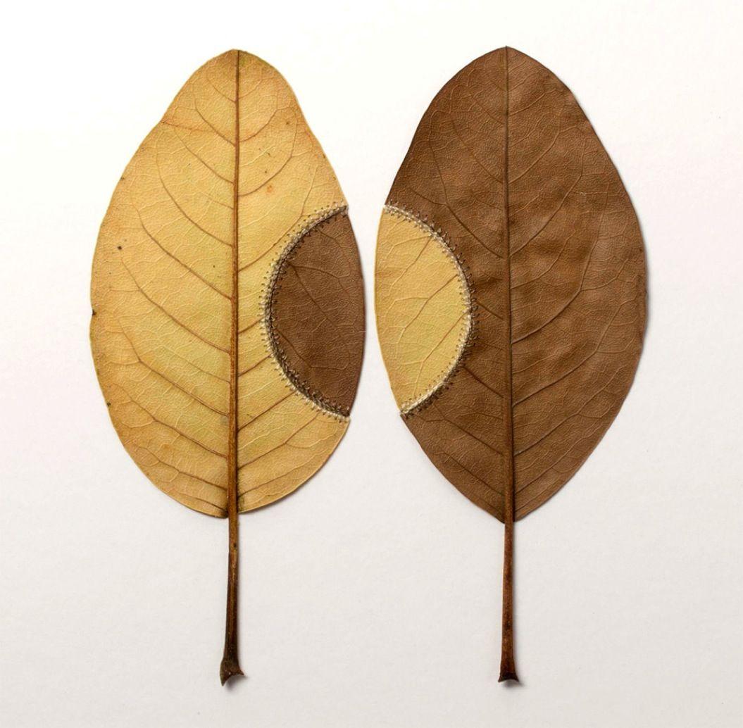 85singo_leaf-9