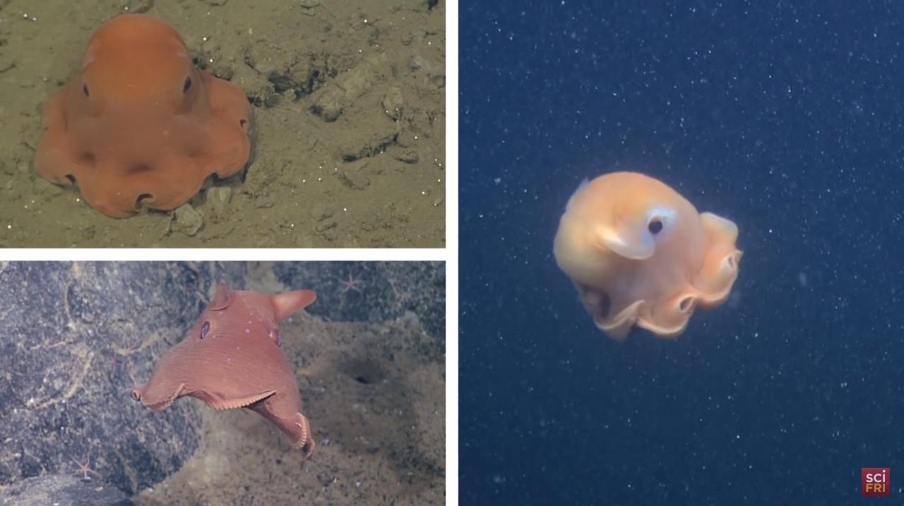 adorable-octopus-2