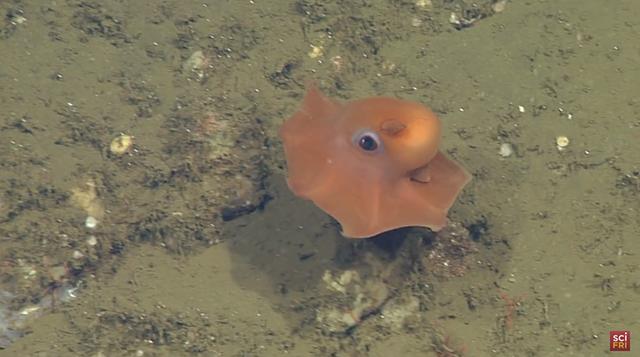 adorable-octopus-3