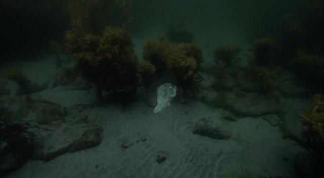 plankton-5