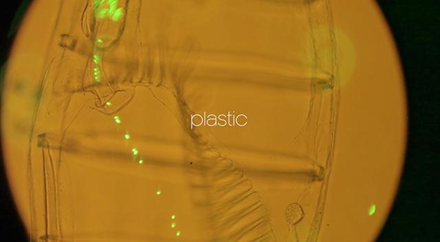 plankton-4