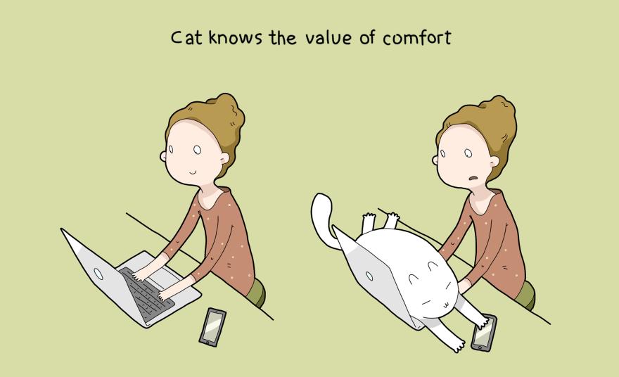 benefit-cat-7