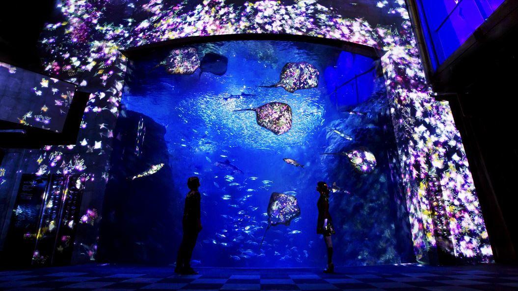 1.花と魚 - 相模湾大水槽(小)_R