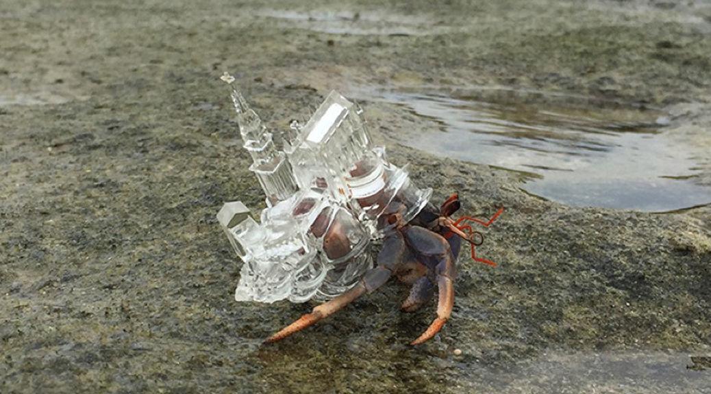 3Dプリンター製のオシャレな宿に住んでる「ヤドカリ」を発見! | TABI LABO