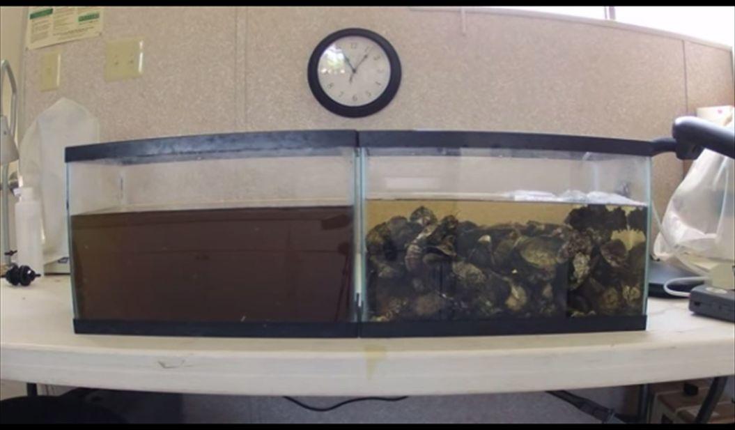 FireShot Capture - 【衝撃映像】汚れた「水」が、たった2時間で驚くほどキレイに!正体は、なんと「牡蠣」? I TABI LABO_ - http___tabi-labo.com_3_R