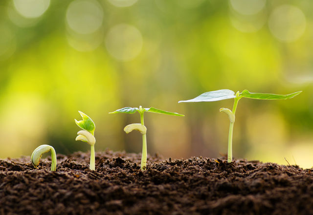 pesticidesplant