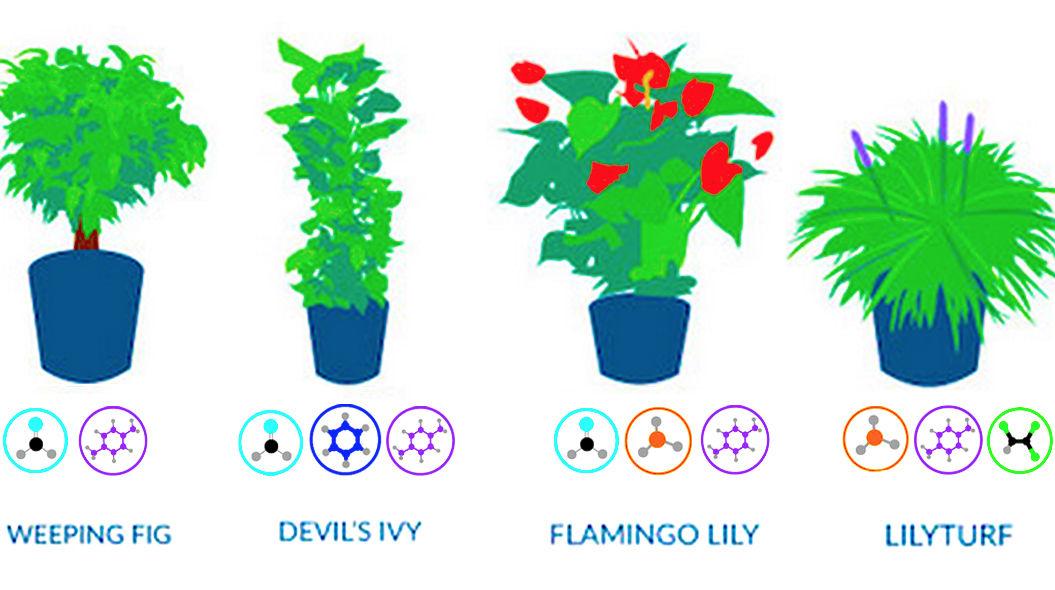 NASAが教える、自宅の空気がキレイになる「18の植物」