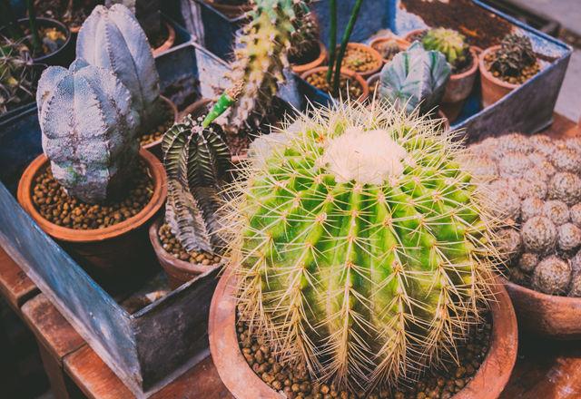 succulent-hydroponic-culture3