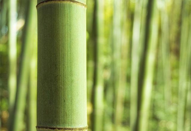 Bamboo grove macro