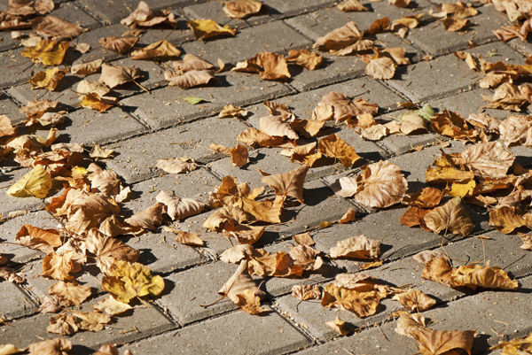 autumn leaves lie on the pavement