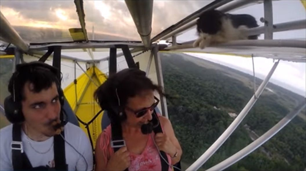 FireShot Capture 1416 - Remove cat before flight - YouTube_ - https___www.youtube.com_watch_R