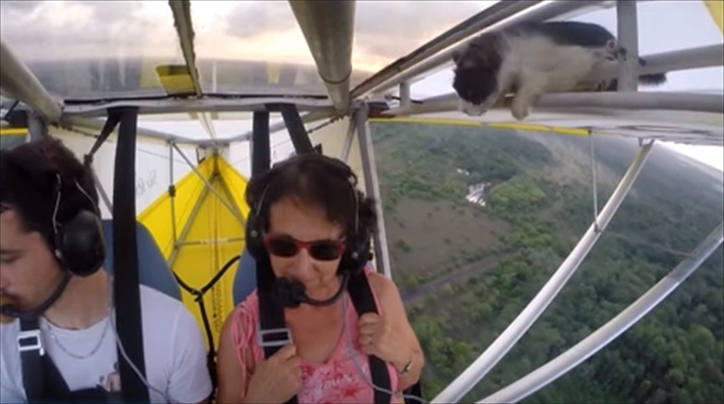FireShot Capture 1417 - Remove cat before flight - YouTube_ - https___www.youtube.com_watch_R
