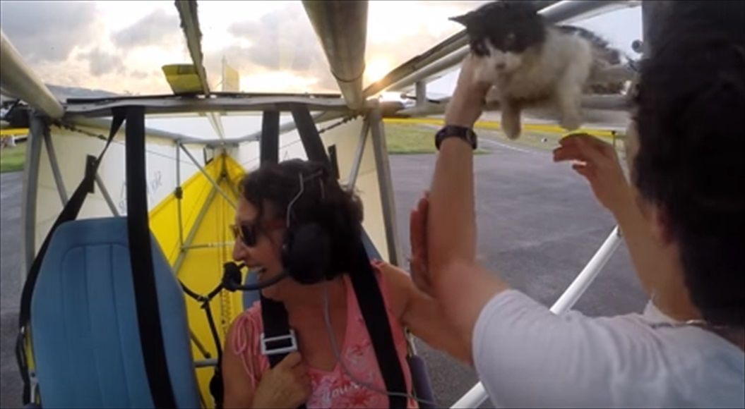 FireShot Capture 1425 - Remove cat before flight - YouTube_ - https___www.youtube.com_watch_R