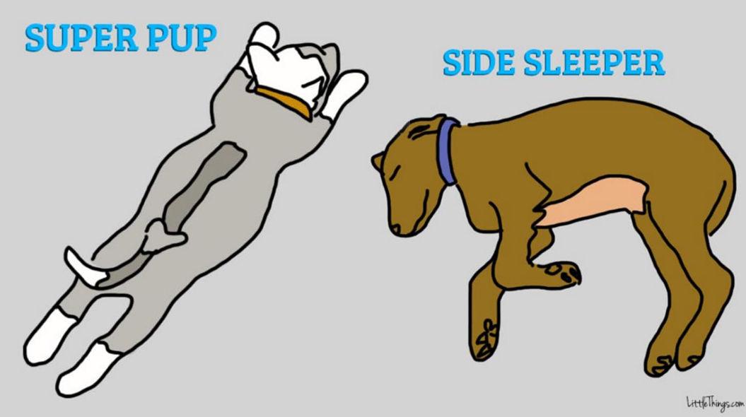 で 犬 寝る 横向き 犬と一緒にベッド入っても大丈夫? 愛犬と寝ることが身体に与える影響