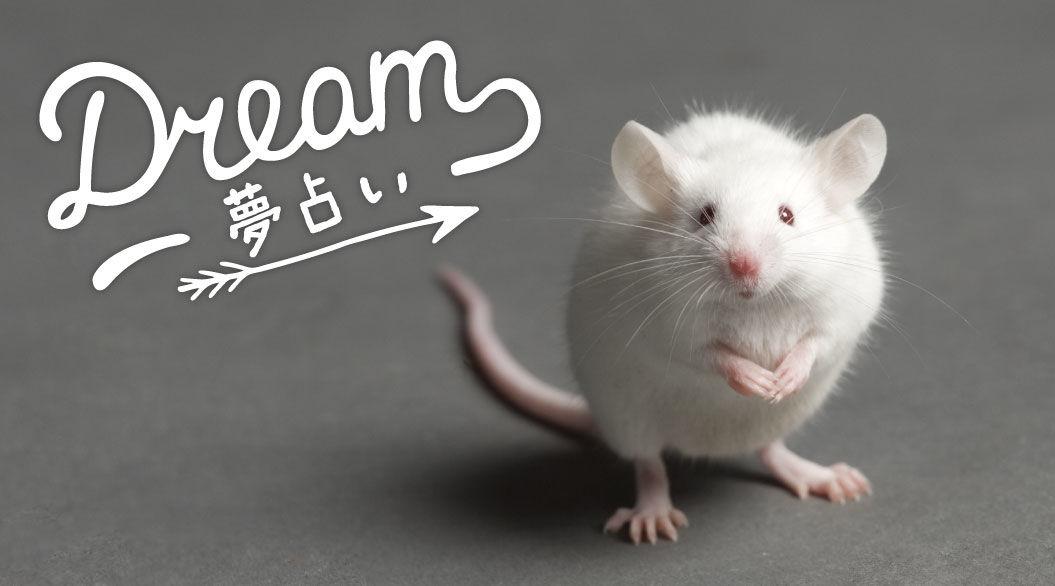 くる 出 ネズミ 夢 て が